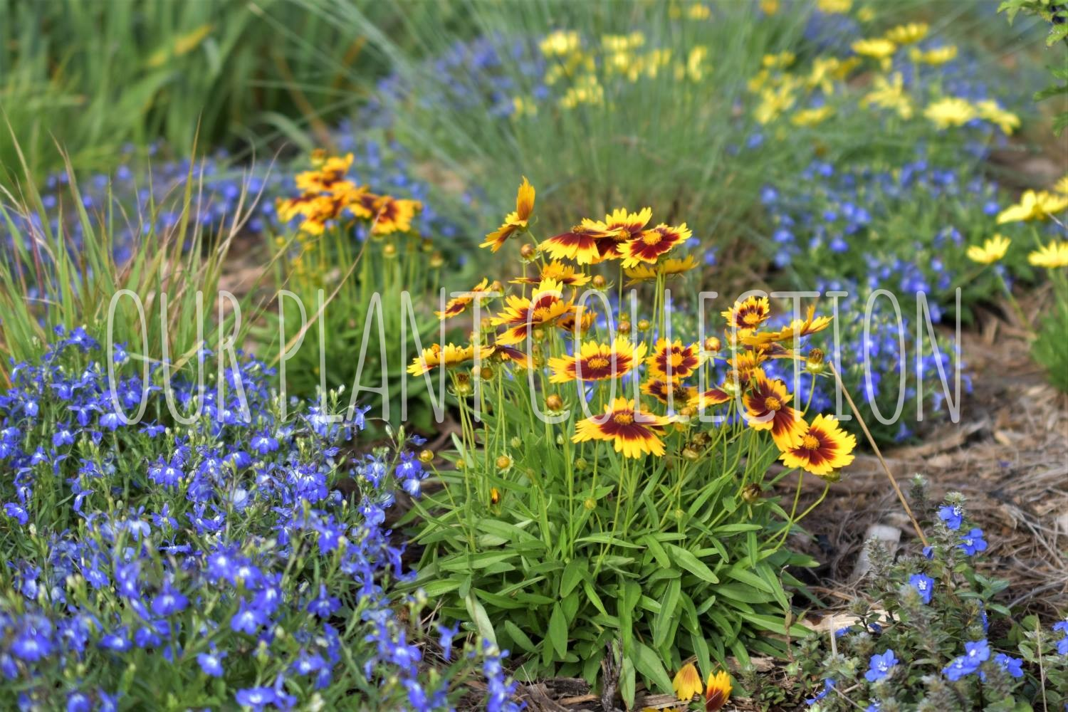 Annuals & Perennials – Mixed Garden