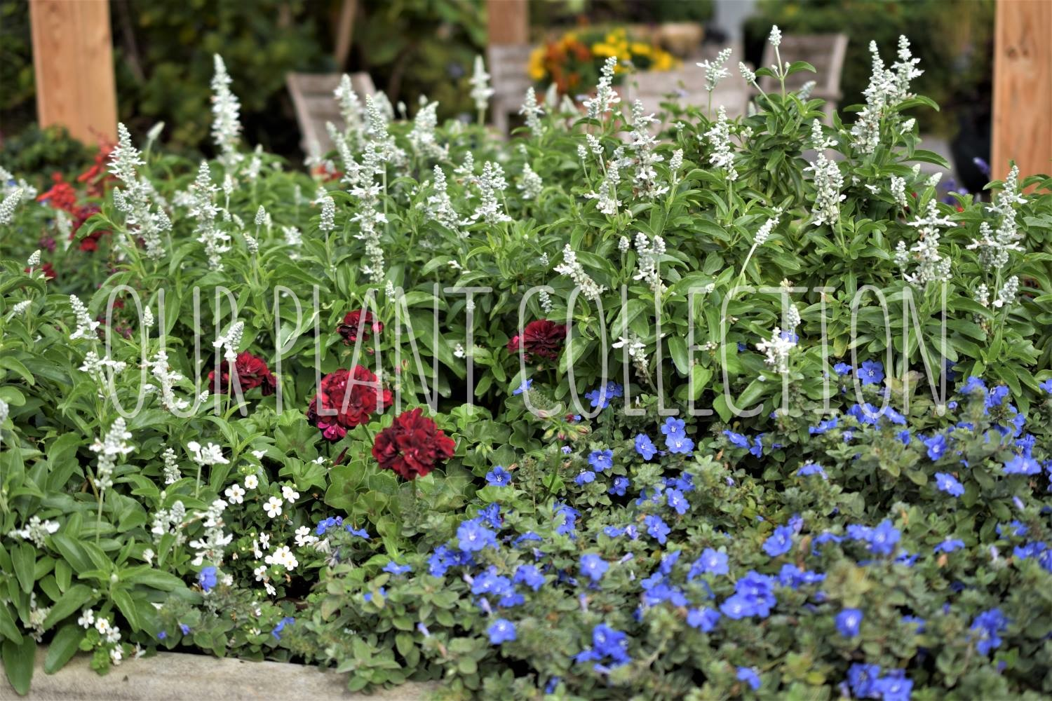 Annuals – Mixed Garden
